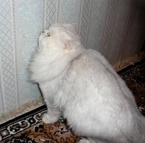 Почему кошка перестала ходит в лоток?