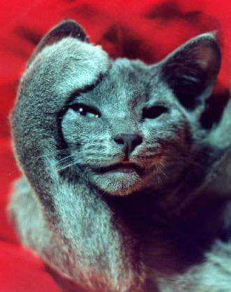 Кошка – животное-целитель