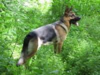 Что надо делать перед тем, как брать собаку в лес?