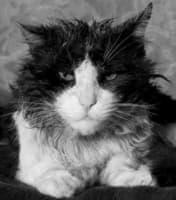 У кошки стресс