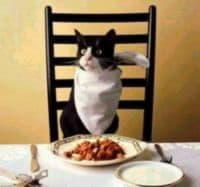 Кормление кошек естественными кормами