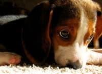 Как сделать комфортной жизнь щенка в вашем доме?