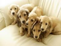 Тестирование щенка