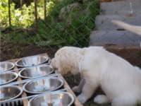 Количество пищи для собак и пищевая аллергия