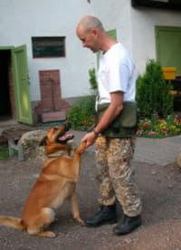 Тон голоса и управляемость собаки