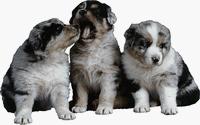 Советы по выбору щенка