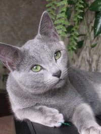 Особенности кошачьего характера