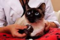 Травмы, отравления, укусы у кошек