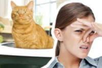 Как вывести запах от кота?
