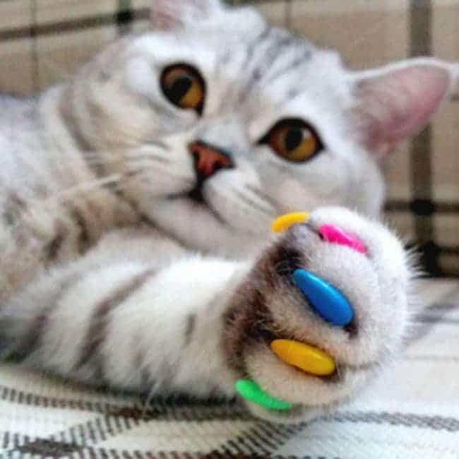 Антицарапки для котов и кошечек