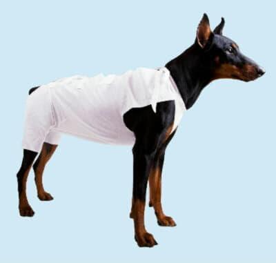 Послеопарационные бандажи для собак