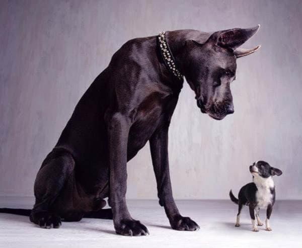 Недостаток кальция в организме у собаки