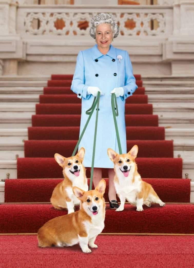 Вельш корги - собачки английской королевы