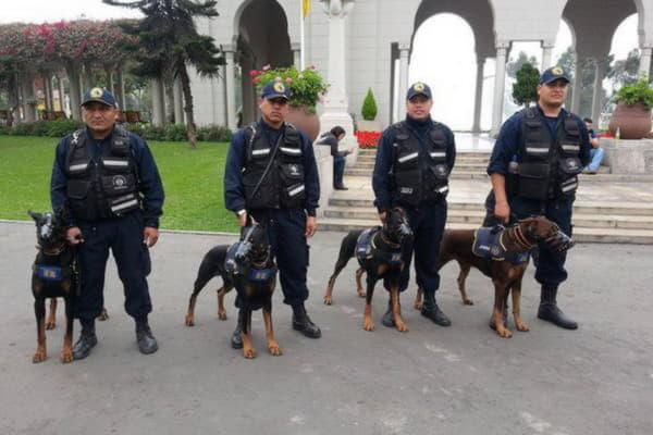 Доберман в полиции