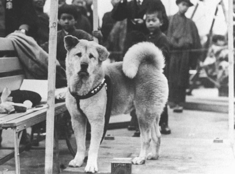 Историческое фото собаки породы Акита-ину