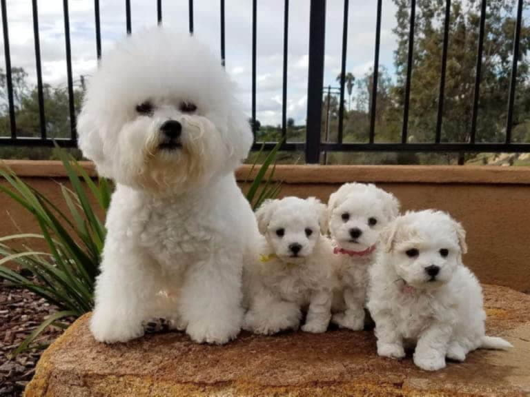 Мама и щенки