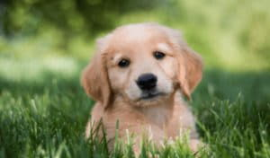 Породы собак для детей