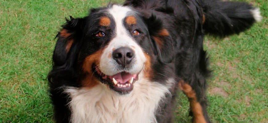 Добрые породы собак