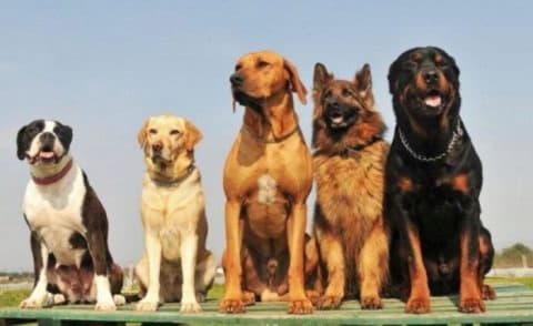 Сравнение пород собак