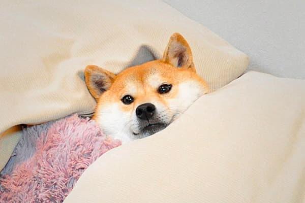 Пора спать...