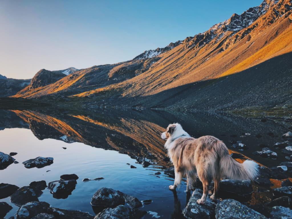 Красивое фото с австралийской овчаркой