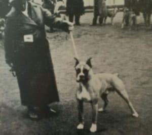 Старая фотография собаки породы боксер