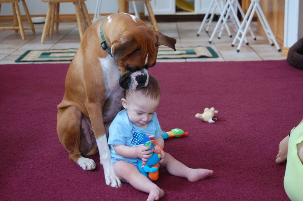 Немецкий боксер с ребенком