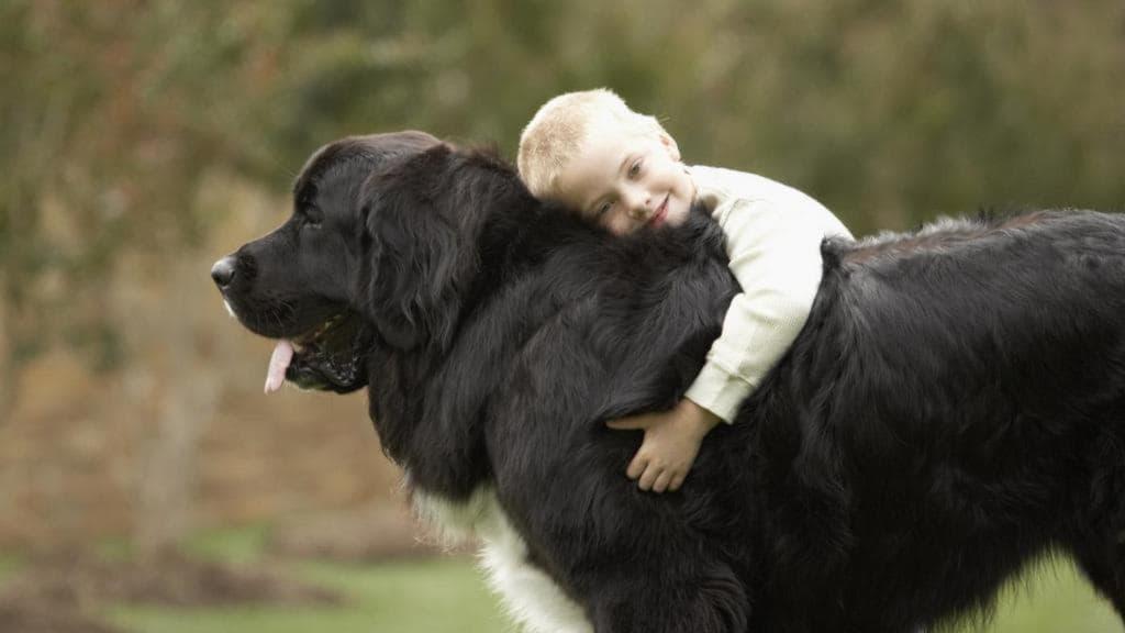 Ньюфаундленд с ребенком