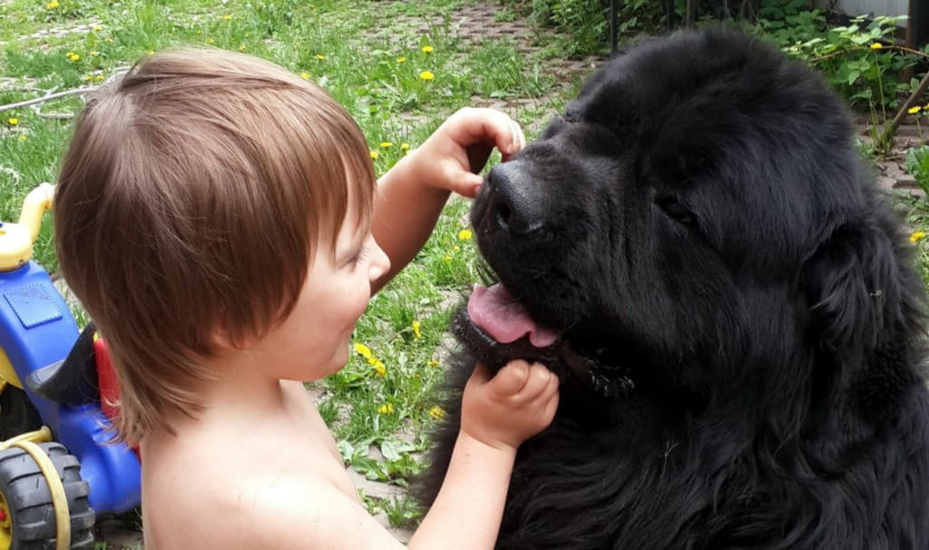 Ребенок и Ньюфаундленд