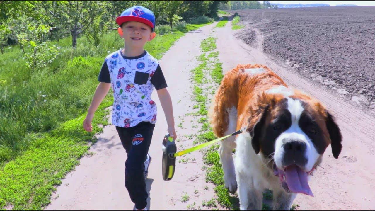 Сенбернар гуляет с ребенком