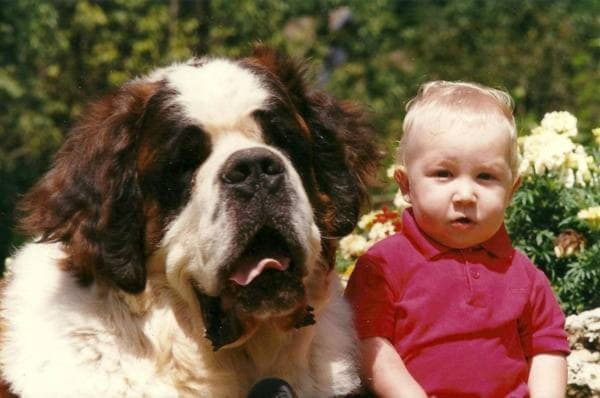 Сенбернар с маленьким ребенком