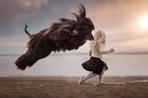 Афганская борзая бежит с маленькой девочкой