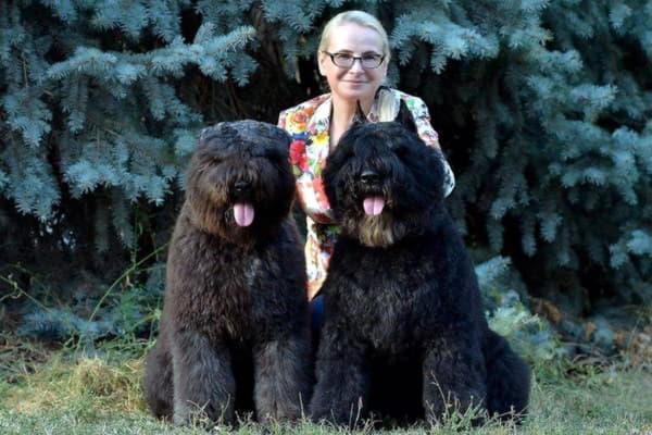 Две собаки породы Фландрский бувье с хозяйкой