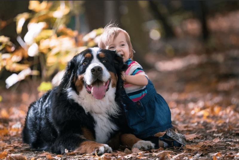 Бернский зенненхунд с ребенком