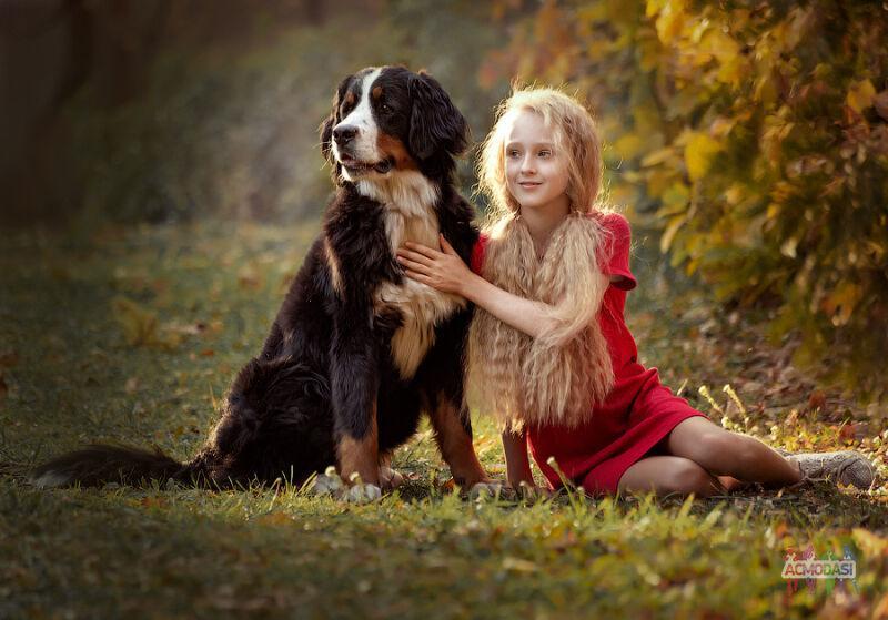 Фотография собаки породы Бернский зенненхунд с человеком