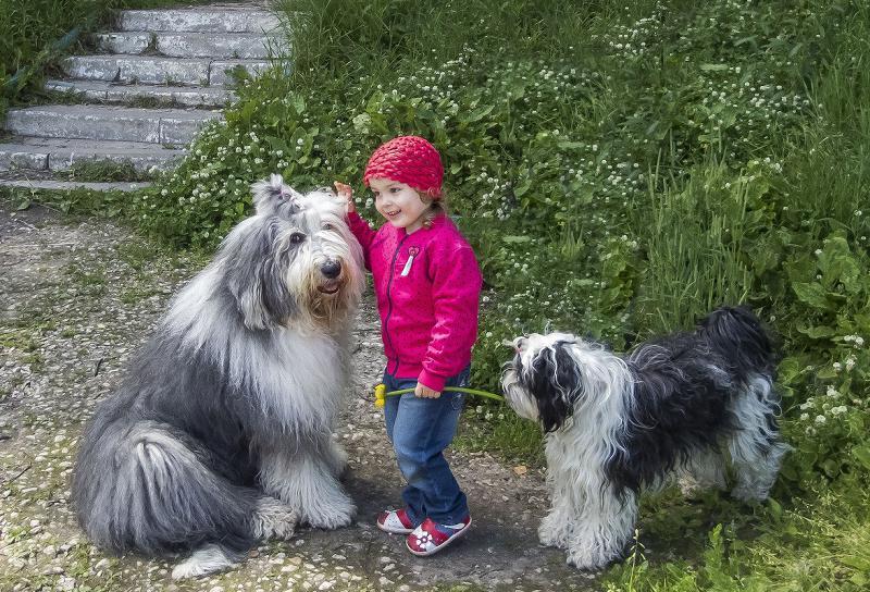 Собака породы Бобтейл с ребенком