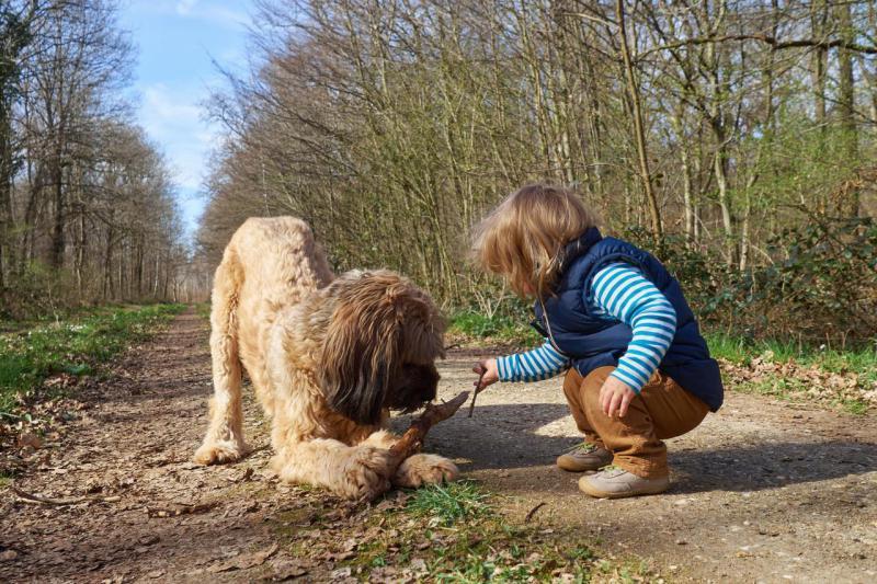 Собака породы Бриар с ребенком