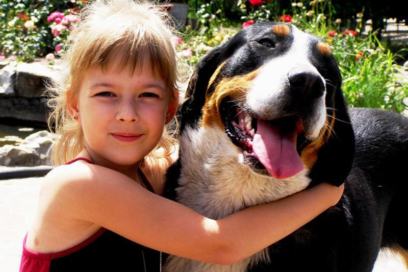 Большой швейцарский зенненхунд с ребенком