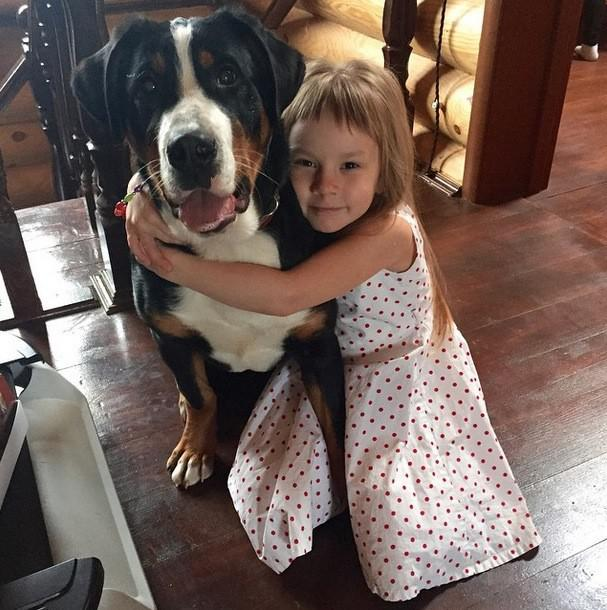 Большая швейцарская горная пастушья собака с ребенком