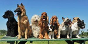 Список сравнений разных пород собак